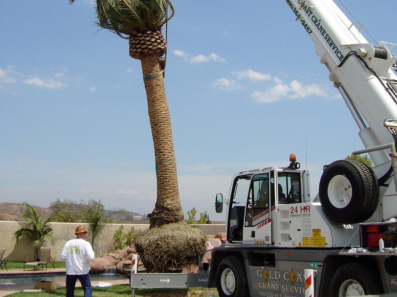 Tree Planting Ventura County By Gold Coast Tree Service