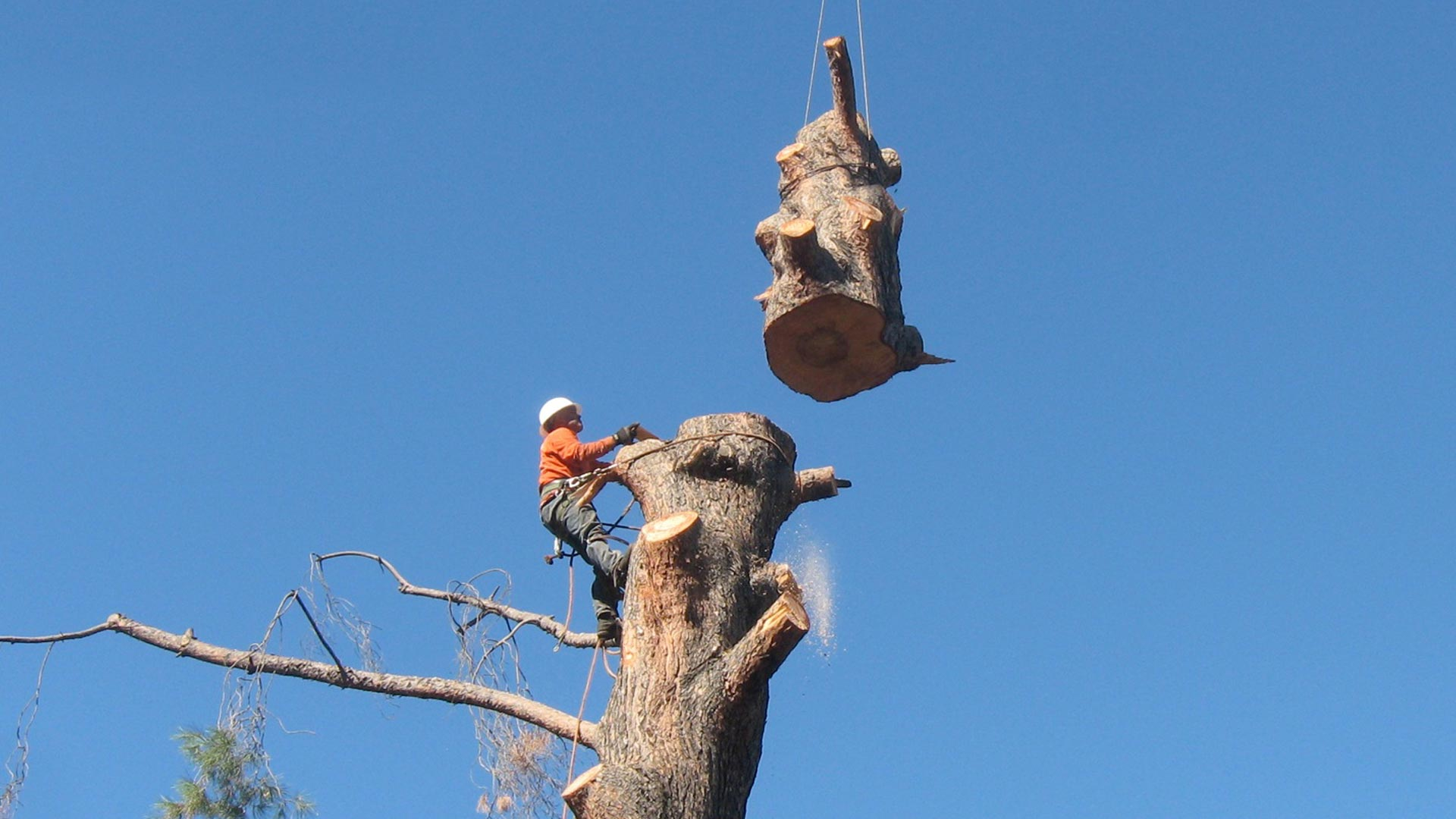 Tree-Removal-Ventura-County-By-Gold-Coast-Tree-Service-1920×1080