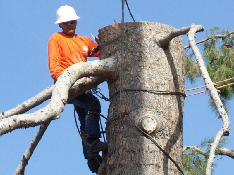 Tree Stump Removal Ventura County By Gold Coast Tree Service